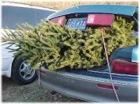 treecar
