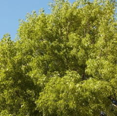 treesm