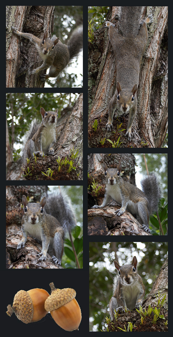 squirrelcollage copy