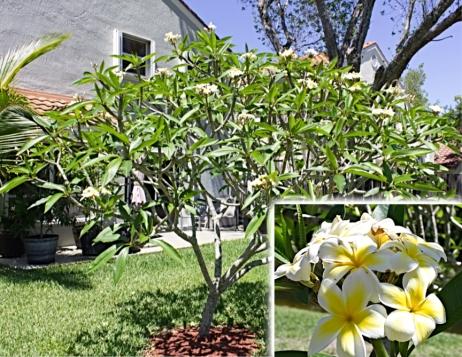 tree-bloom