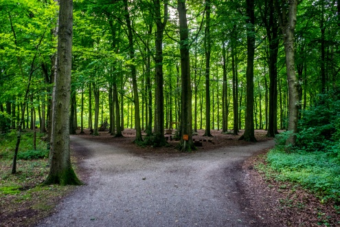 Parting of a road at Haagse Bos, forest in The Hague